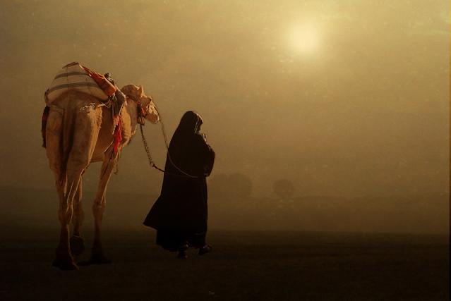 Camel back end