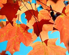 Jumble of Blazing Color