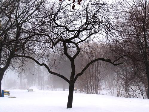winter ontario nature landscape olympus gnarly saultstemarie northernontario naturephotography algoma ontariocanada coldasice bellevuepark reflectionsofthenorth algomaontario
