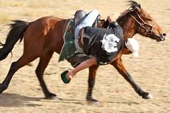 english riding(0.0), western riding(0.0), racing(0.0), eventing(0.0), dressage(0.0), western pleasure(0.0), animal training(0.0), mustang horse(0.0), barrel racing(0.0), animal sports(1.0), rodeo(1.0), equestrianism(1.0), mane(1.0), mare(1.0), stallion(1.0), equestrian sport(1.0), rein(1.0), sports(1.0), endurance riding(1.0), halter(1.0), bridle(1.0), pack animal(1.0), equitation(1.0), horse(1.0), horse harness(1.0), jockey(1.0),