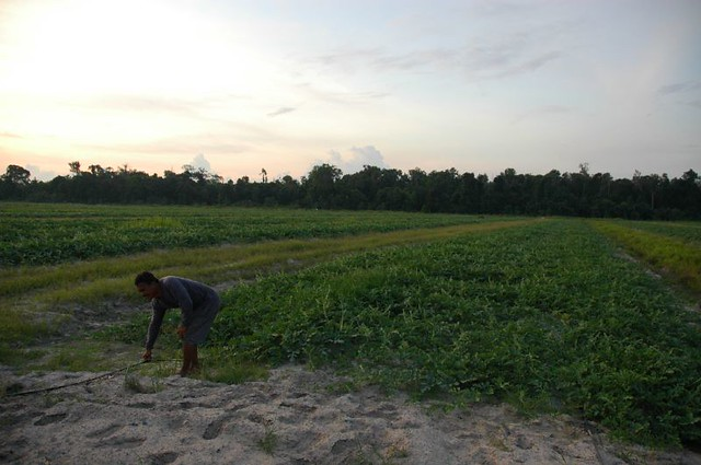 Ladang Tembikai