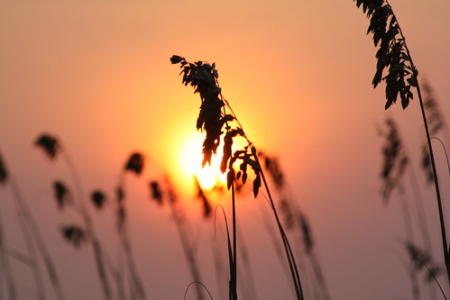 pink sky sun sc sunrise geotagged myrtlebeach bokeh seaoat brillianteyejewel grouptripod geo:lat=33659192 geo:lon=78916189