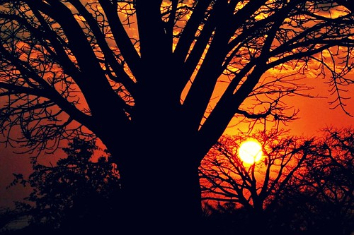 life sunset tree malawi boabab colorphotoaward