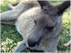 animal, donkey, marsupial, mammal, fauna, wildlife,