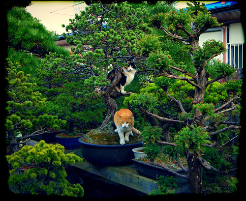 Bonsai Cats