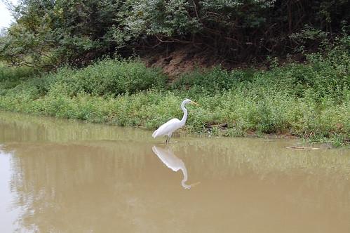 Day 1 - Boat Ride - Birds (13)