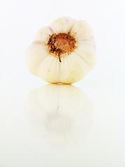 frischer Knoblauch