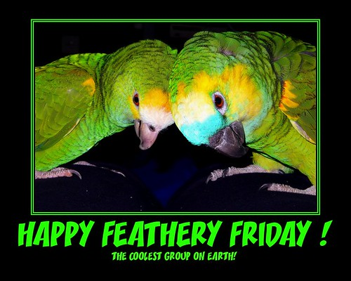 Happy TWO-BIRD 2nd Bird-Day Feathery Friday! by *volar*