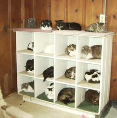 shelving, shelf, furniture, room, cupboard,
