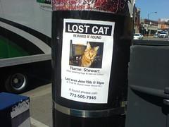 Lost Stewart