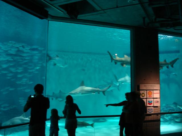 Audubon Aquarium Of The Americas New Orleans La Flickr