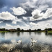 Swan Lake by ` Toshio '