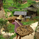 Carrying Potatoes Down Hill - Guizhou Province, China
