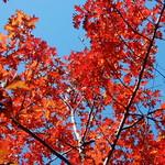 Tree Afire