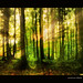 A dreamy forest in upper bavaria by MyOakForest