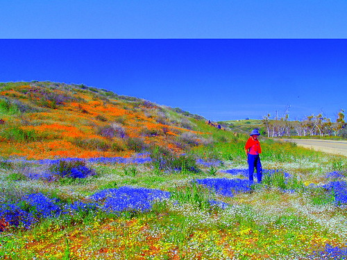 road county flowers blue wild orange white green riverside hill sage poppies wildflowers