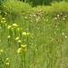Bog Garden by k8tron