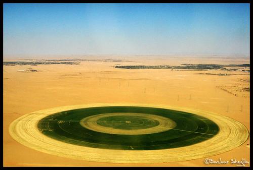 Sahara can become green again !
