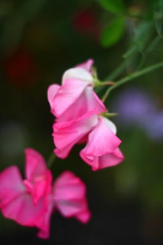 Kent Road Flower 20