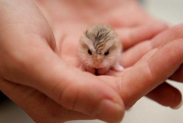 Hamsters - 1