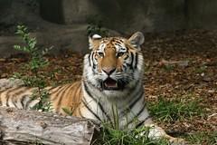 Brookfield Zoo Visit