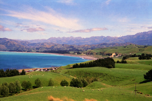 Nature and Whale Watching in Kaikoura - New Zealand