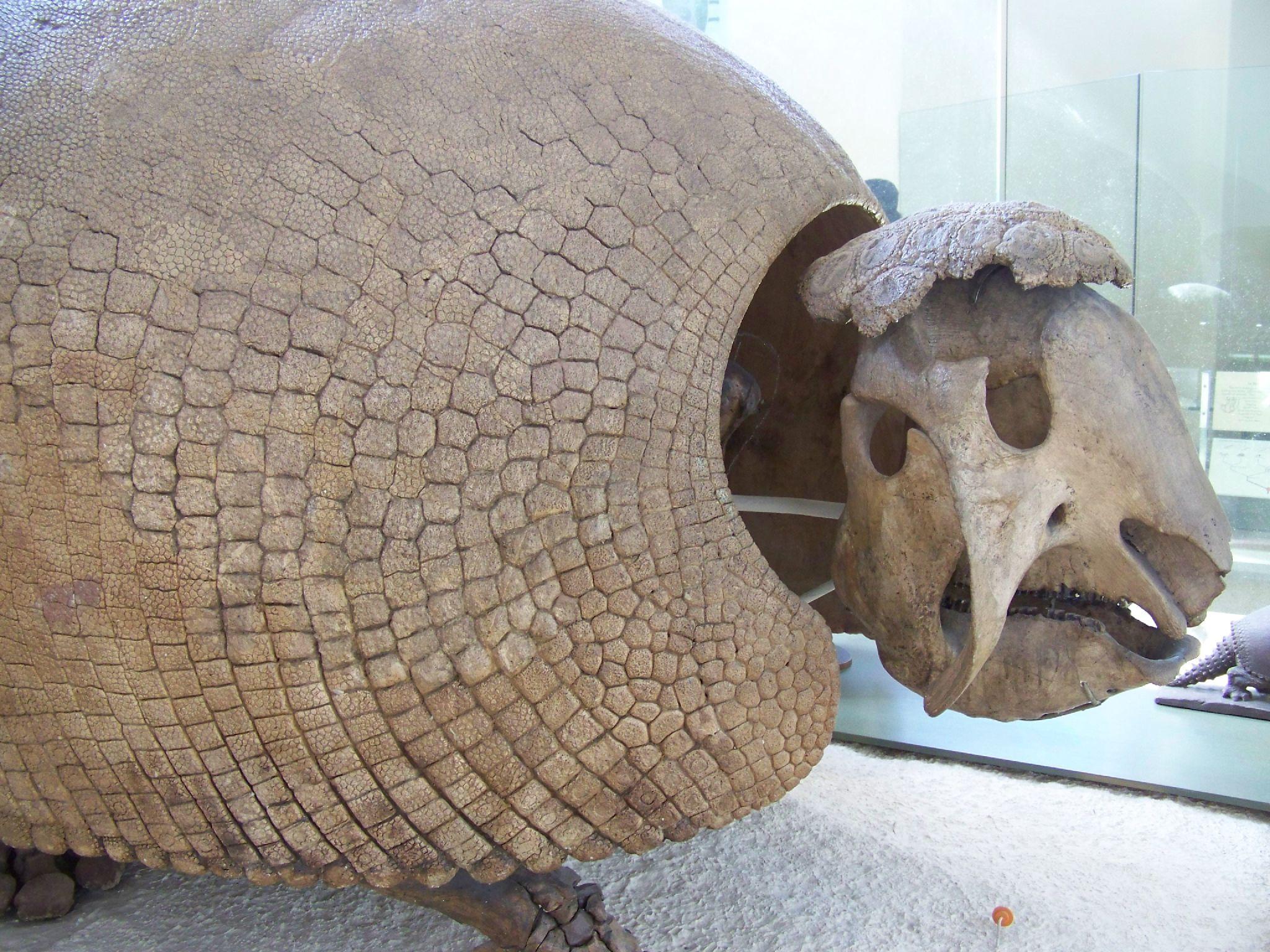 Ancient giant armadillo - photo#27