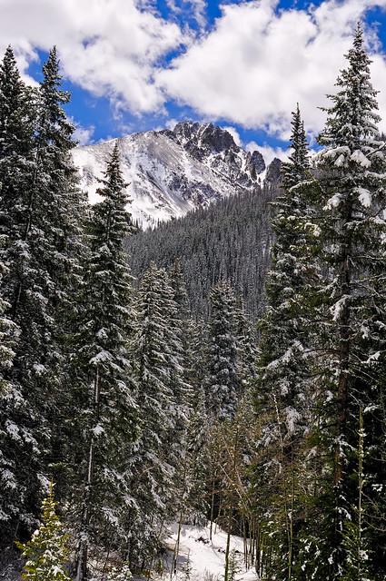 The Monochromatic Beauty of Fresh Snow