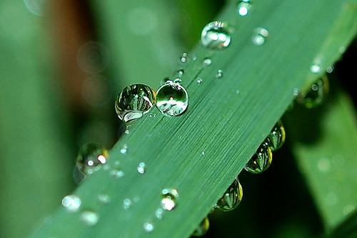 Like a diamond in the grass ... by Sreejith K
