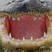 gator by Slingher