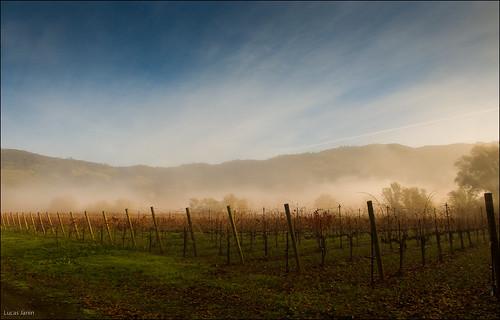 california blue sky usa color fog landscape iso800 nikon ciel getty 24mm nikkor paysage brouillard gettyimages ukiah lightroom f13 redwoodvalley nikond700 lucasjanin afsnikkor2470mmf28ged ¹⁄₈₀₀sec