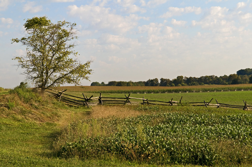 cornfield of Antietam