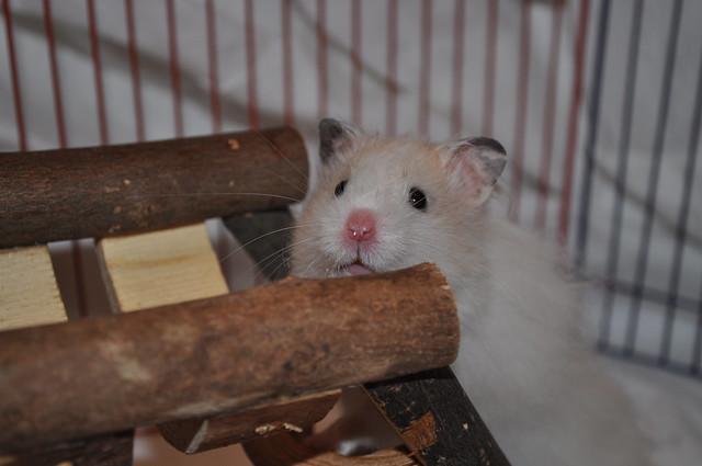Cirrus in the Playpen