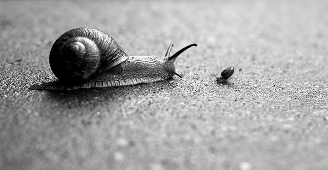 カタツムリの大事な殻