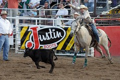 bull(0.0), reining(0.0), fair(0.0), barrel racing(0.0), bull riding(0.0), animal sports(1.0), rodeo(1.0), cattle-like mammal(1.0), western riding(1.0), event(1.0), equestrian sport(1.0), tradition(1.0), sports(1.0), charreada(1.0), horse harness(1.0),