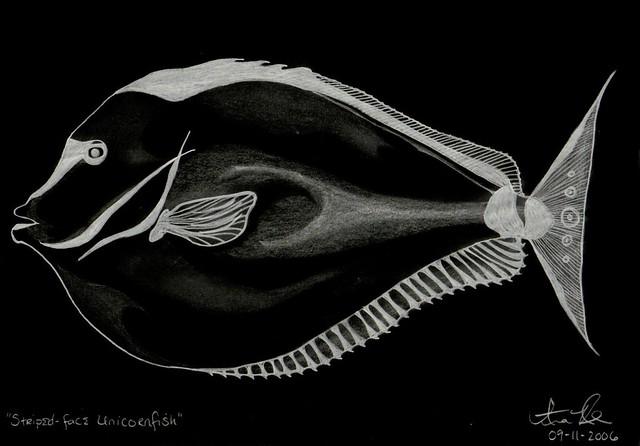 Header of Striped-Face Unicornfish