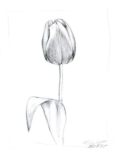 Displaying (18) Gallery Images For Tulips Pencil Drawing... Pencil Drawing Pictures Of Flowers