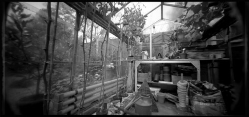 inside my father's greenhouse, september 2008