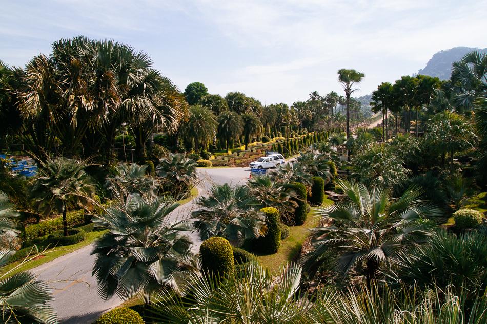 Cycad Garden, Nong Nooch Tropical Garden, Pattaya