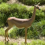 Los Angeles Zoo 049