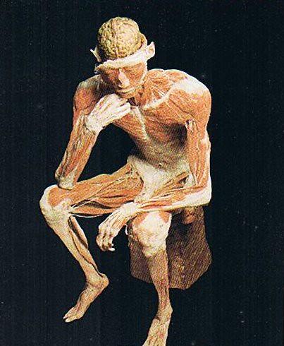 Human body exhibition 2404800555_fbae5e055e
