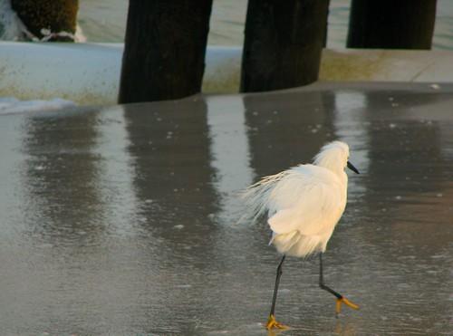 beach birds sunrise
