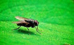 Fly on Green