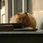 Fat Cat - Beijing, China