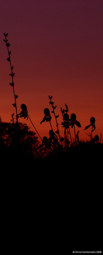 sunset usa atardecer deaborn almostnight dsch7 hybridcameras omarsan casidenoche