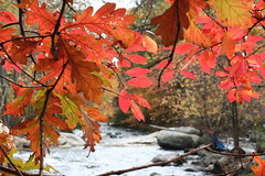 Red leaves over the falls