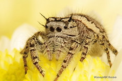 Female  Jumper.