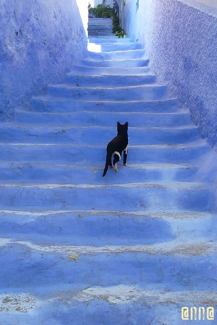 4, 5 phu....it's tough on the cat walk
