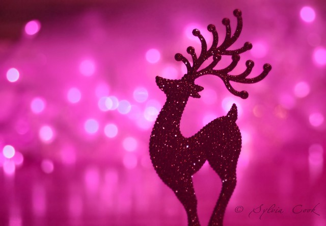 have yourself a merry little pink Christmas