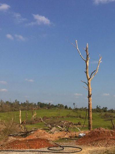 Tree debarked by tornado (Hackleburg)
